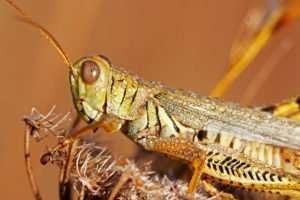 Macro Grasshopper photo by Gail Rowley Ozark Stream Photography