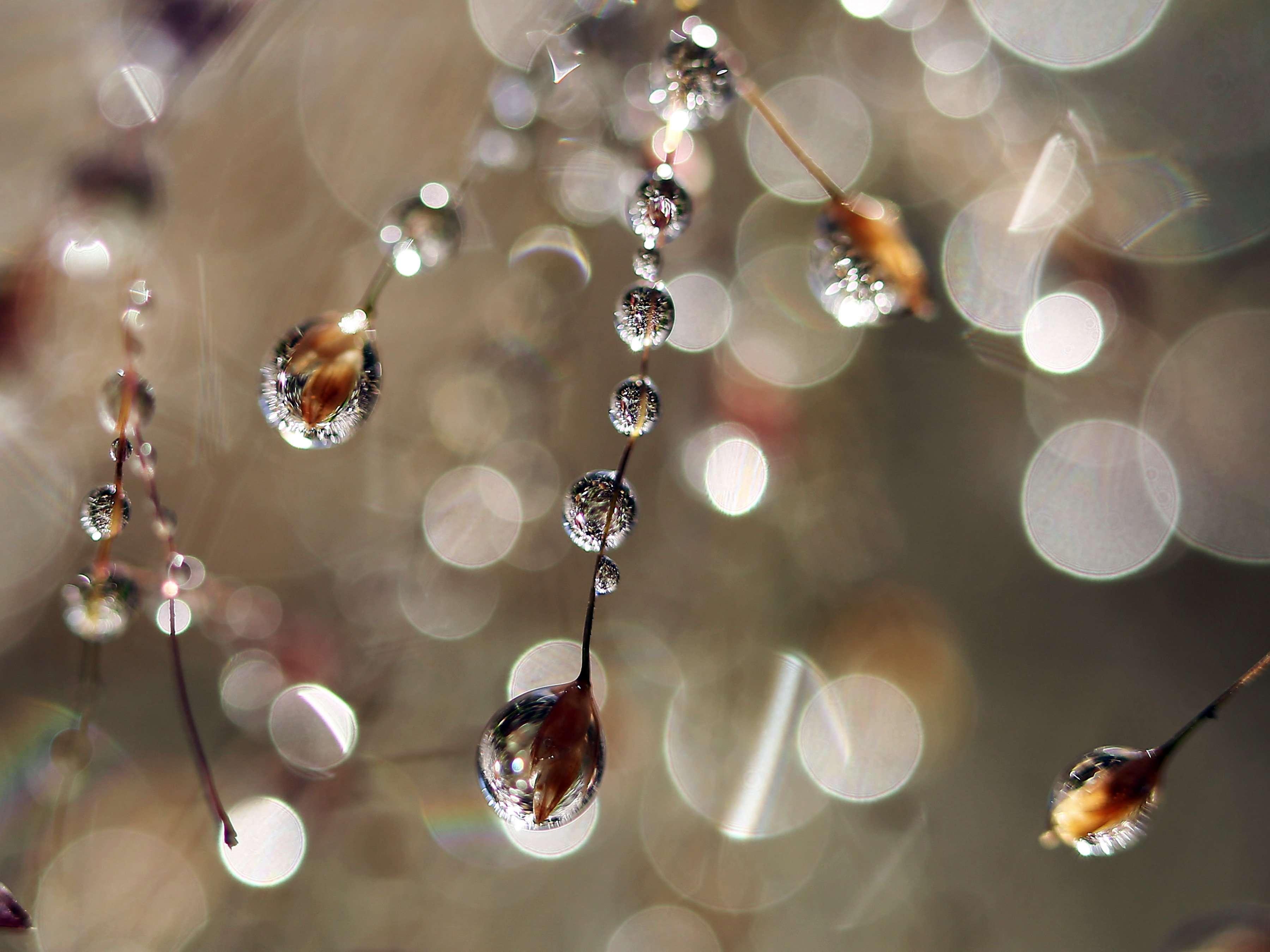 dew-laden native grasses create crazy-cool art