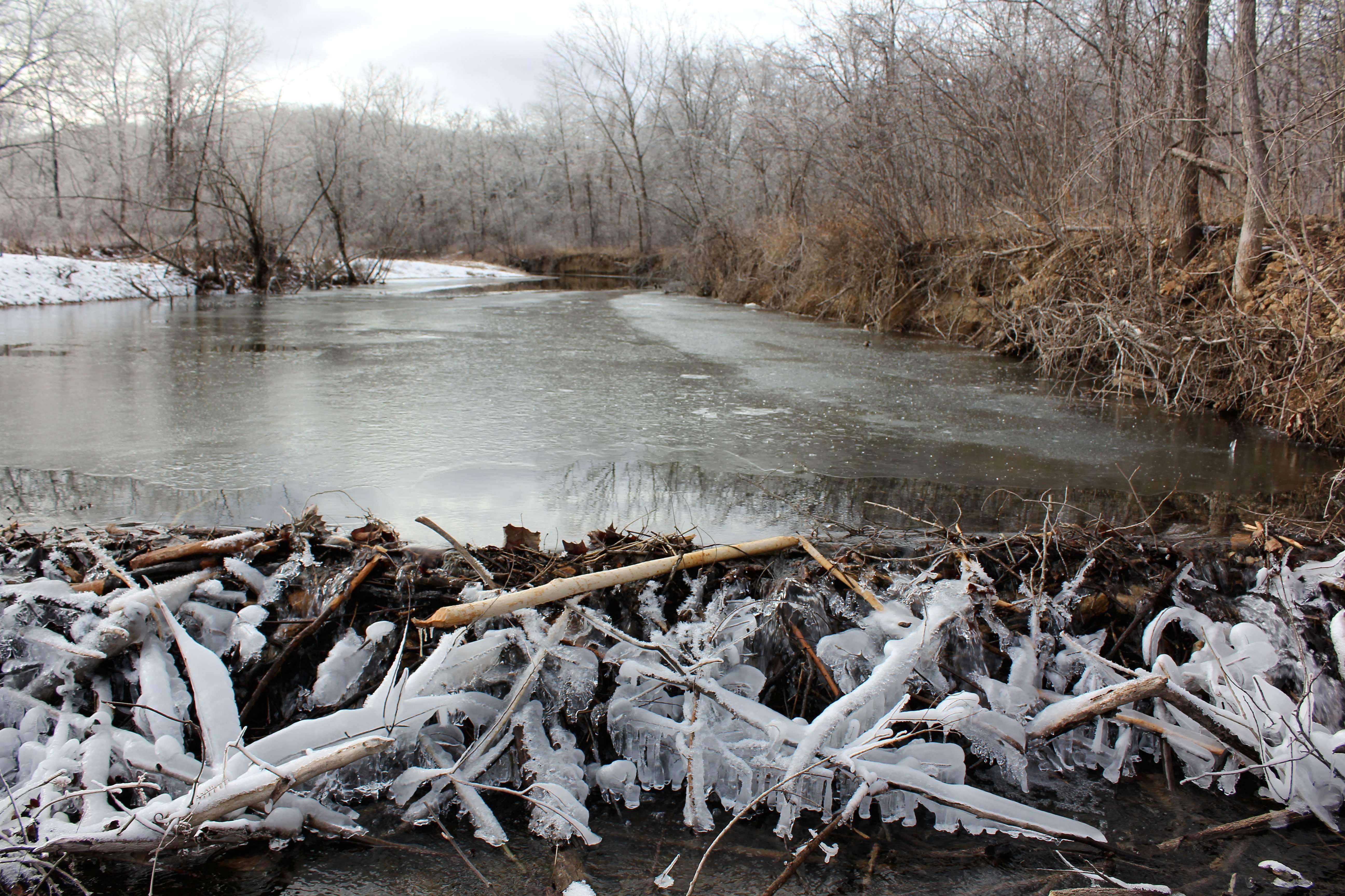 Frozen Beaver Dam winter creek