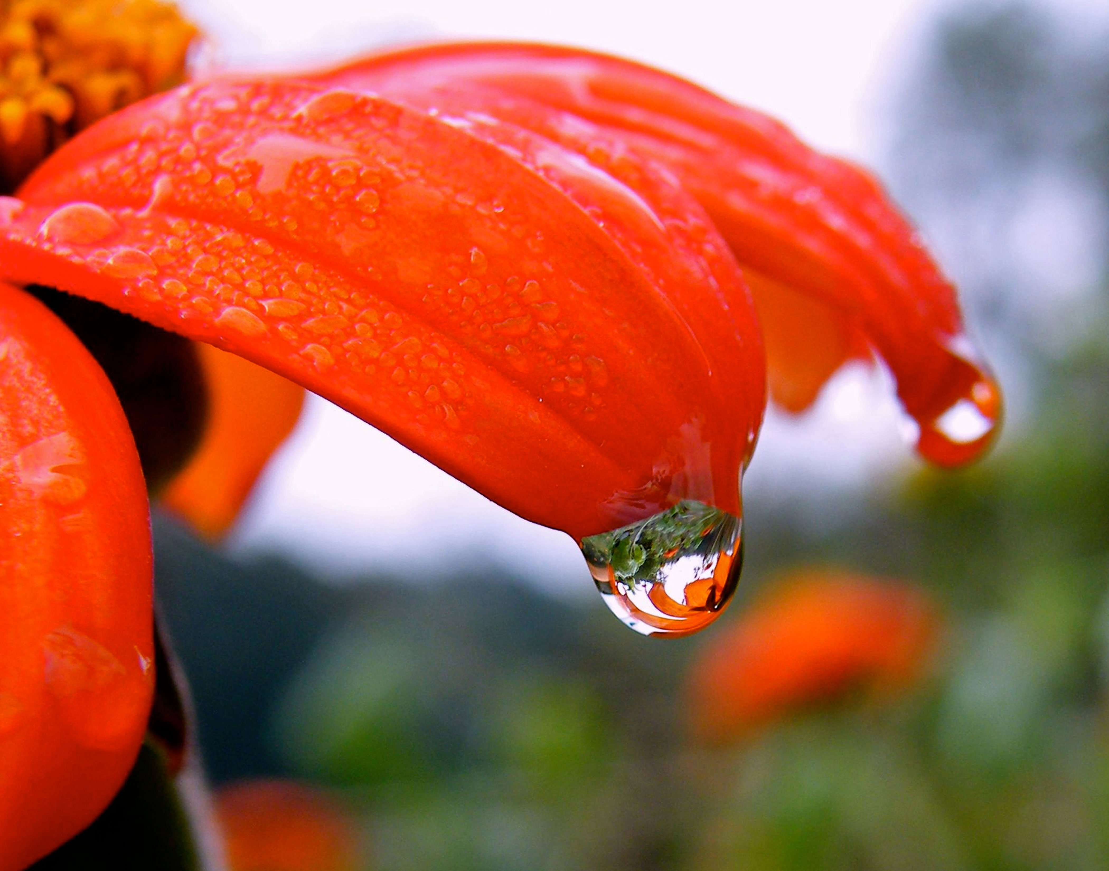Dewdrop reflects a flower and herb garden