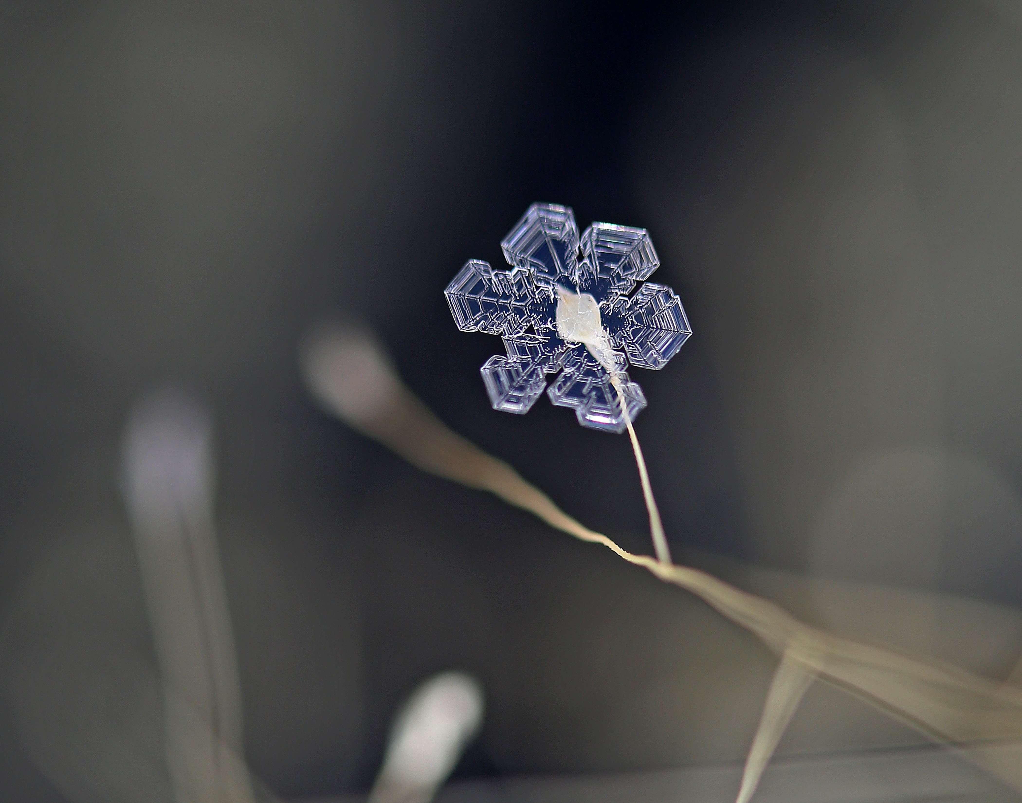 Ice Crystal on Lovegrass