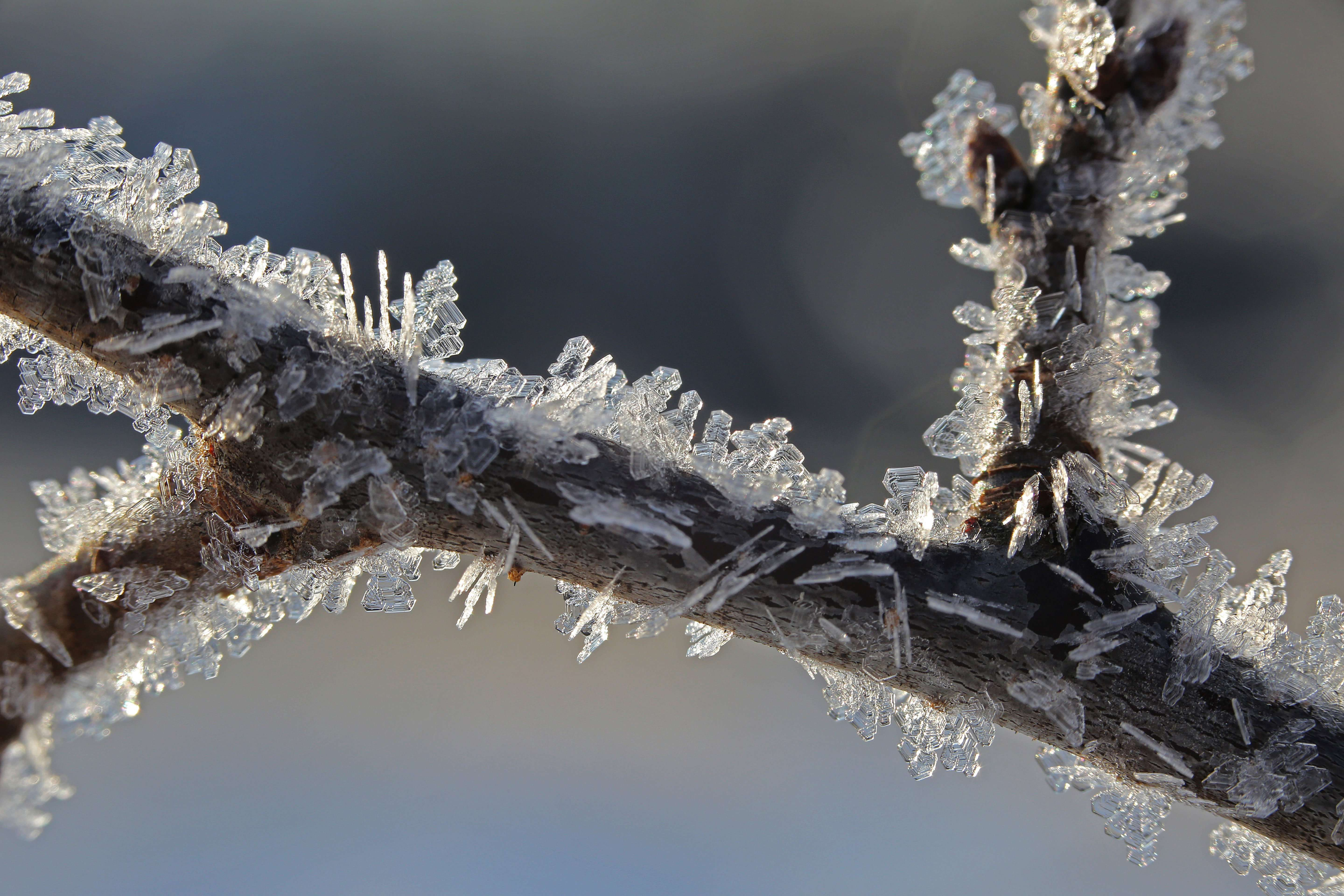 Ice Crystals cover tree branch