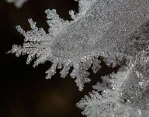 Winter Ice Crystals look like Lace