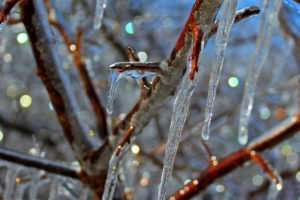 Winter Icicle Lights