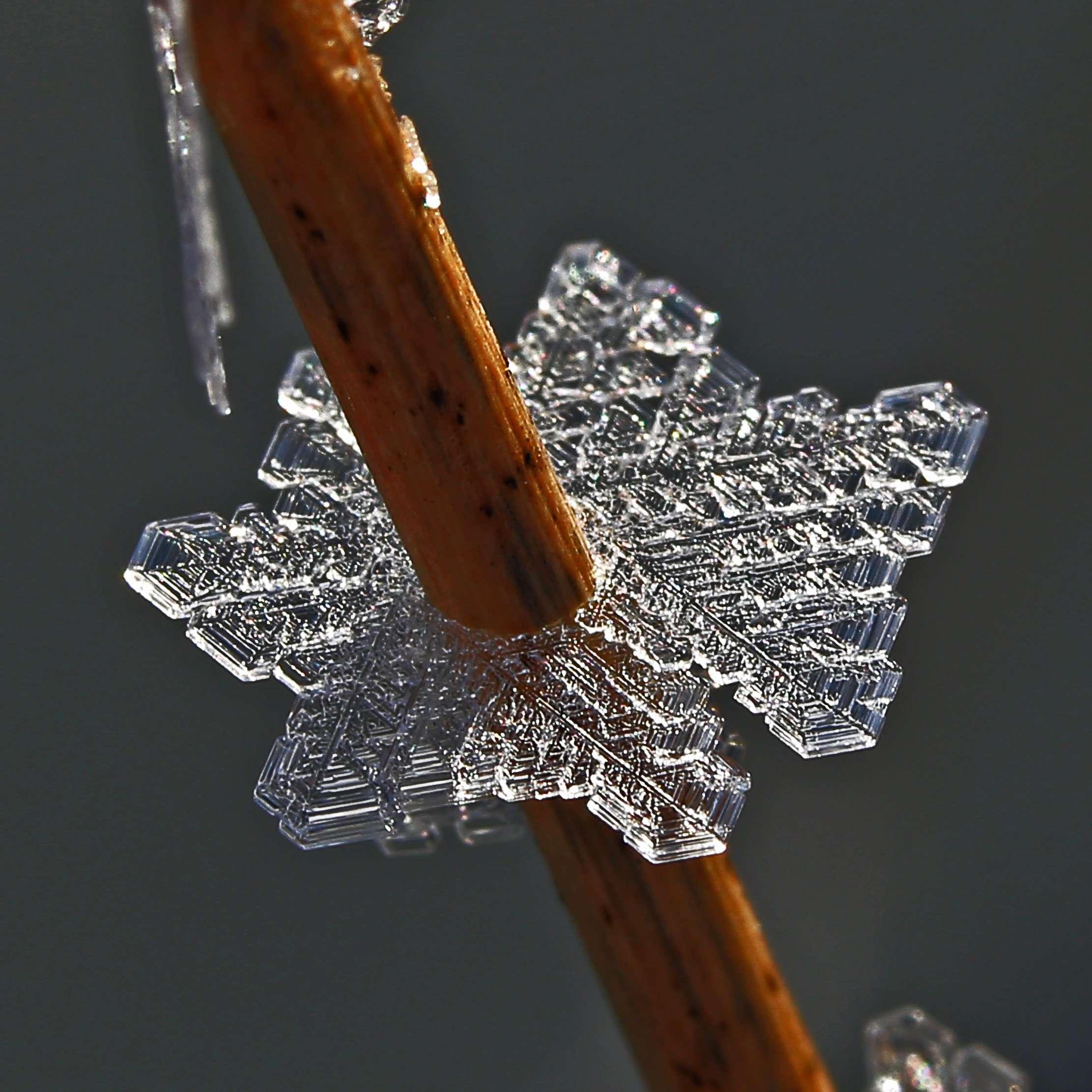Prairie Ice Crystal on Native Grass Stem