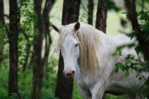 Wild Ozark Horse