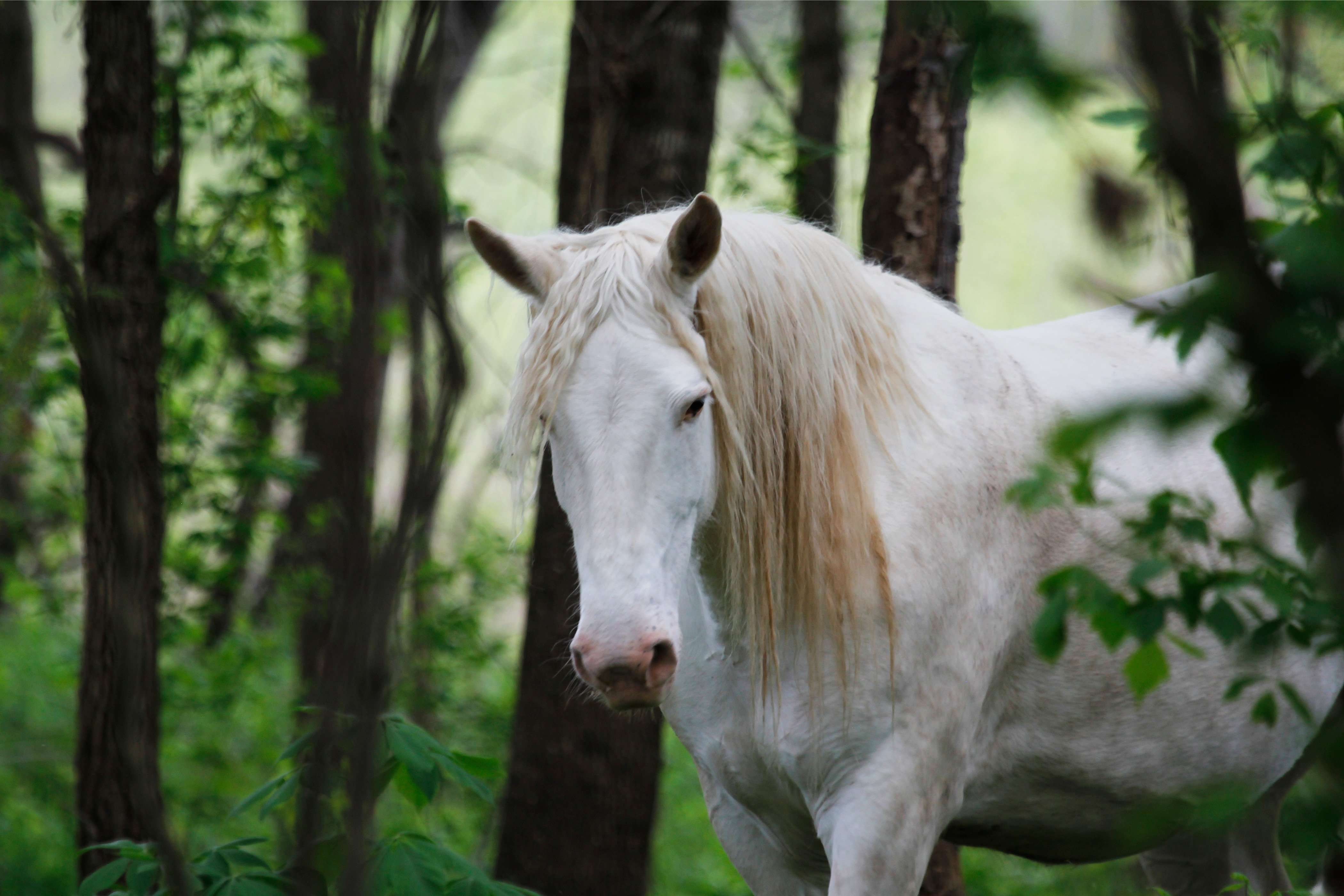 """Wild Ozark Horse """"Mother to Be"""""""
