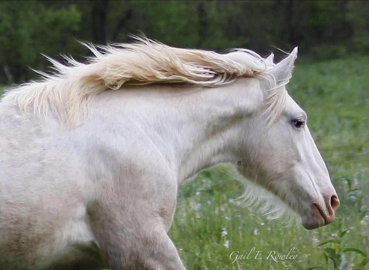 Wild Horse of Ozarks Running